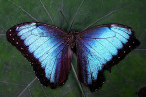beautiful blue butterfly in bali, women's empowerment workshop